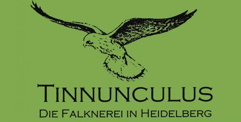 Falknerei Tinnunculus Heidelberg